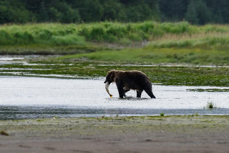 20170816__KT26727_2017-08-16 Alaska SSCL Tent Camp 5110.jpg
