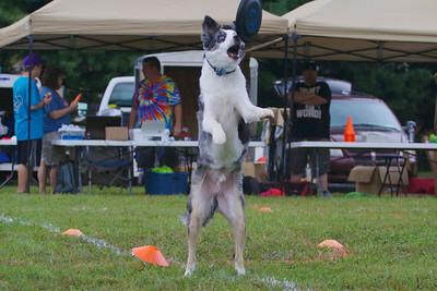Canine games II