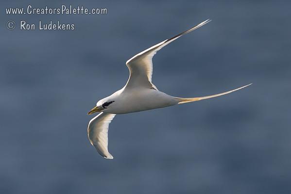 Birds of Maui