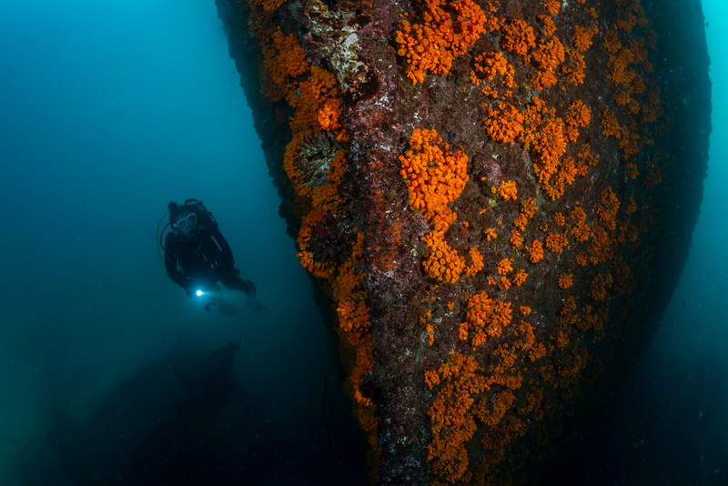 Diving the wreck of the San Macario in the bay of Mindelo, São Vicente, Cape Verde.  Only 15 metres deep, this former Libertyship is a relaxing afternoon dive.  #underwaterphotography #Zeeland #uwphotography #scuba #underwater #duiken #marinelife #diving #wreckdiving #Nikon #Nauticam #Duikspotter #traveltips #onderwatersport @ewdr_divetravel