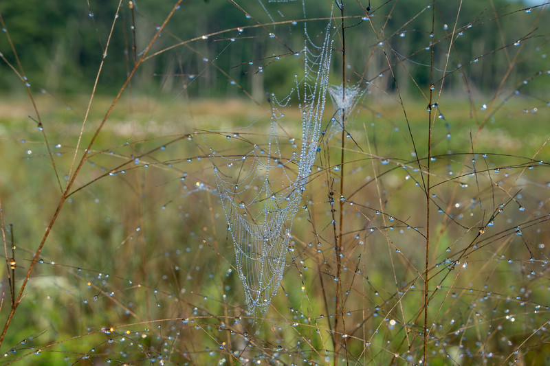 Morning-dew-drops-glistening-sun-spiderweb.jpg