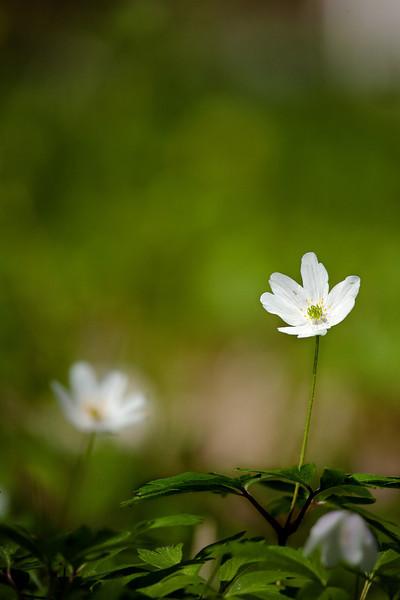 Dag_034_2012-maj-15_6219.jpg