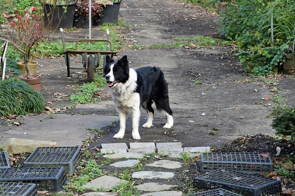 DOGS at SATORI  --  6 Dec 2020