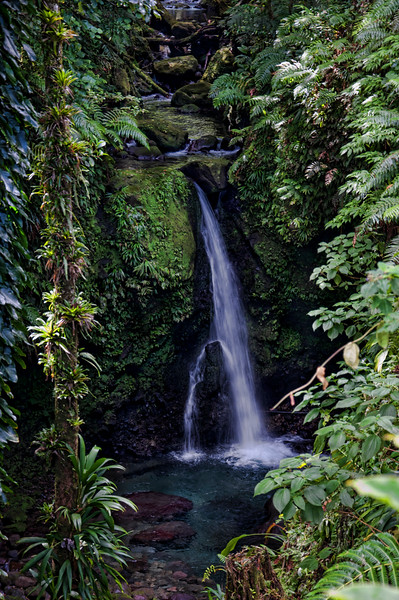 Beautiful Jacko Falls surrounded by a lush jungle forest.