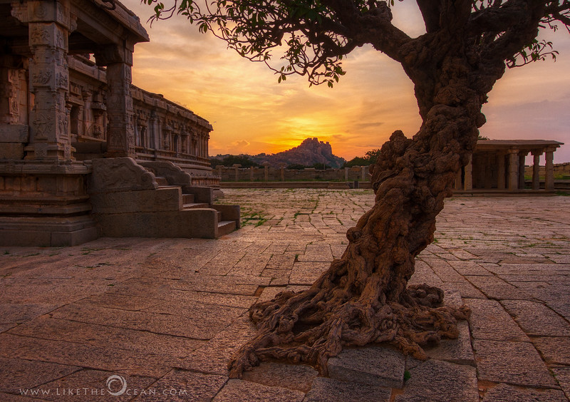 That tree in Hampi