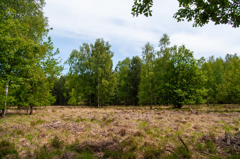 Nationaal Park Hoge Kempen - Duinengordel, omgeving Donderslag 27.jpg