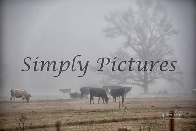 fog 0374