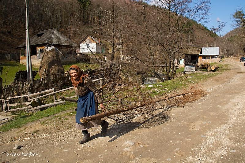 הזקנה עם בול עץ.jpg