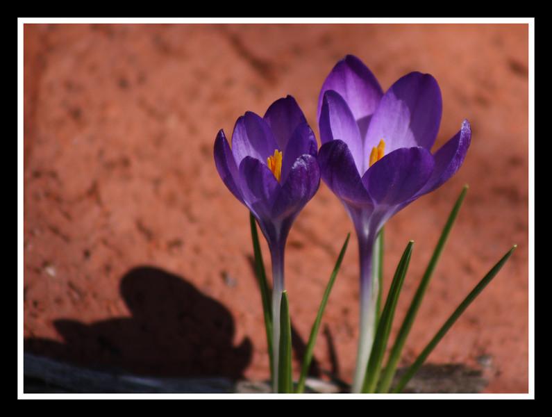 April 2, 2008 - 0014.JPG