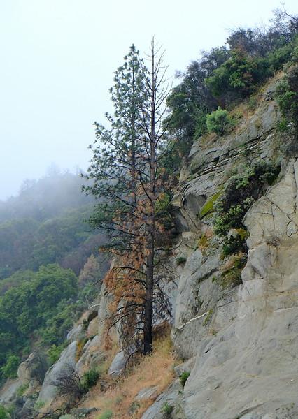 California Day 6 Kings Canyon 05-30-2017 7.JPG