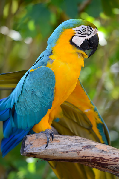 ryle-lenzi-irwin-st-augustine-alligator-farm-rookery-macaw-profile.jpg