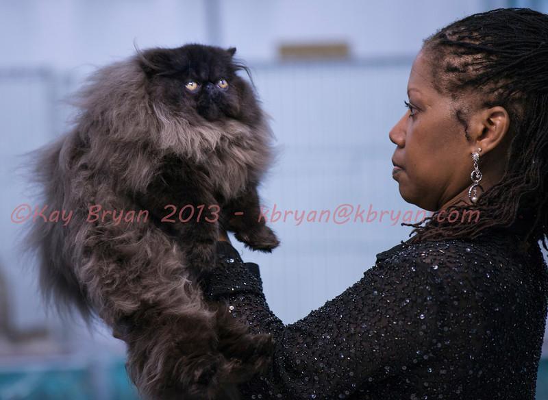CatShow2014071_1.jpg