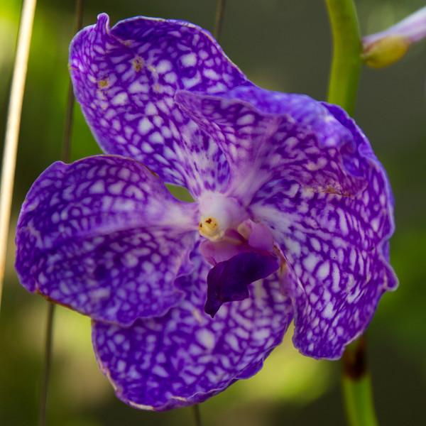 naples_botanical_garden_0054-LR.jpg
