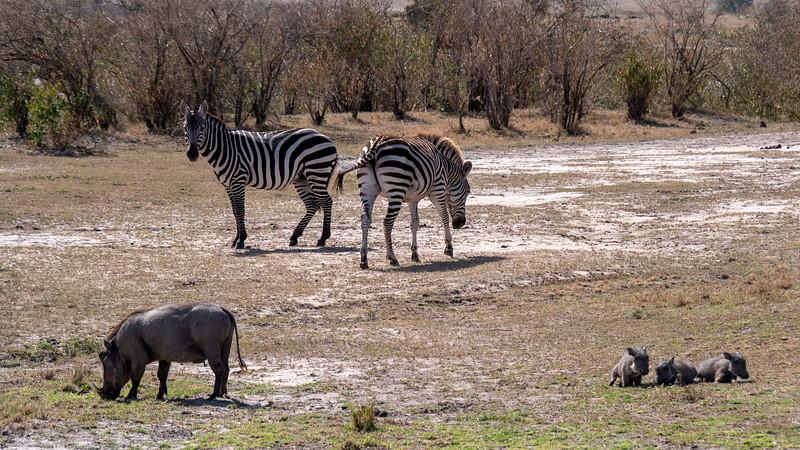 Tanzania-Serengeti-National-Park-Safari-Warthog-04.jpg