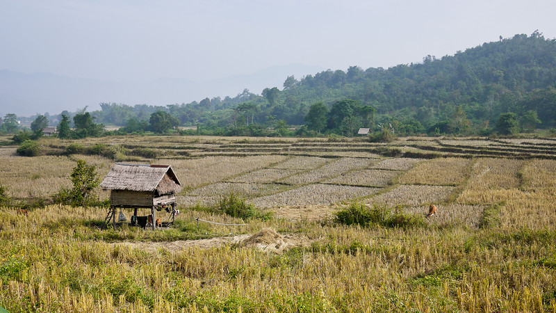 The rice paddies and wide open fields of rural Laos, outside of Hongsa.