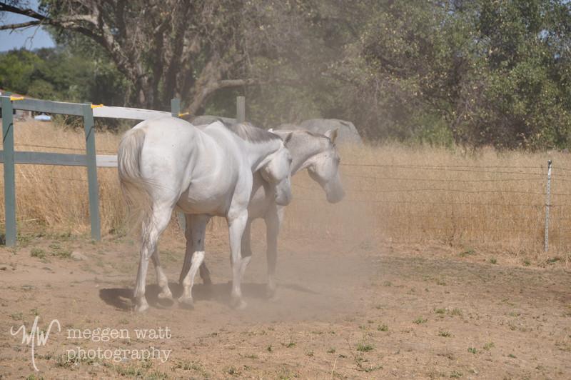 EB&Horses-099.jpg