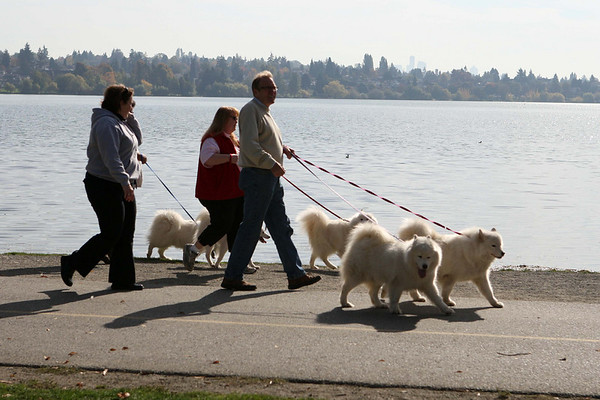 Green Lake Dog Walk