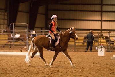 Horse 659