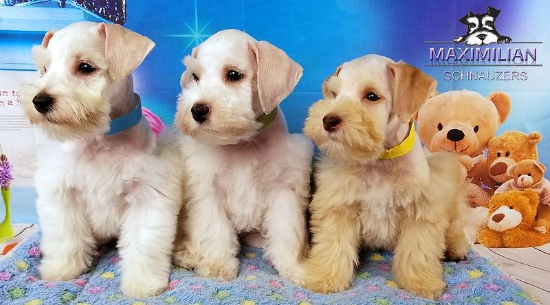 Jasmine Pups 010.jpg