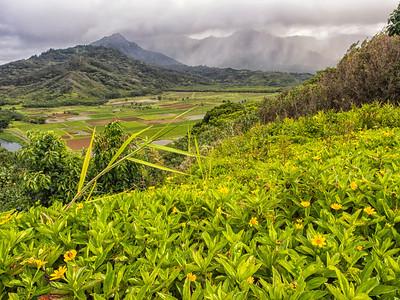 June 2014 - Kauia, Hawaii - Olympus OM-D m10