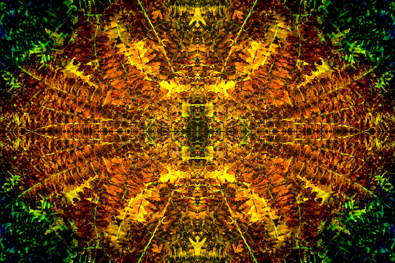 Golden Fern Mandala.  I discuss these abstract nature images in my recent blog article, and have arranged my favorites in a gallery.  See my website.