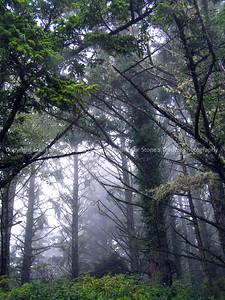 025-trees_fog-yaquina_head_or-18oct06-0022