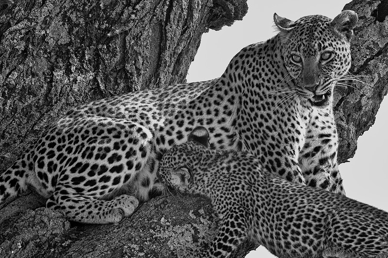 Tanzania 2013 1605.jpg