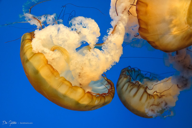 Jelly Fish -5.jpg