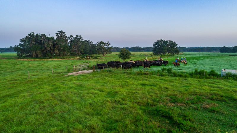 Barthle Cattle  (19 of 27).jpg