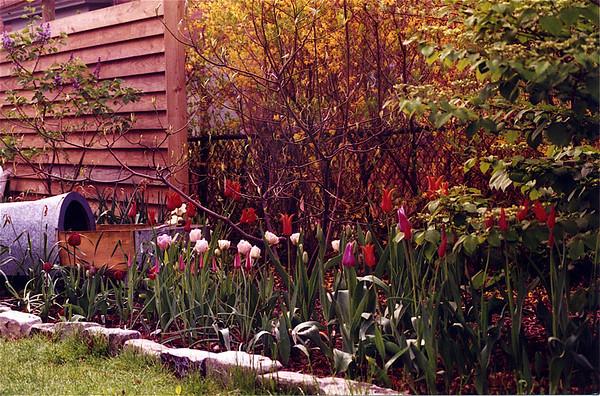 garden beds of old