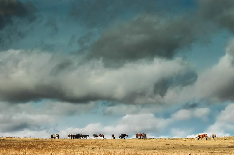 Wild Horses Under Big Sky #5