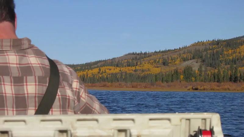 moose 2012.avi