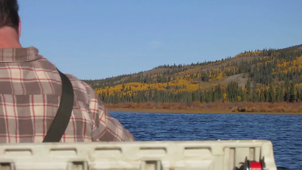 yukon moose vid and pics 2012