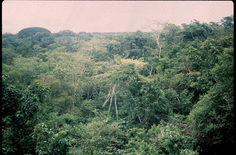 life in the rain forest is in the canopy