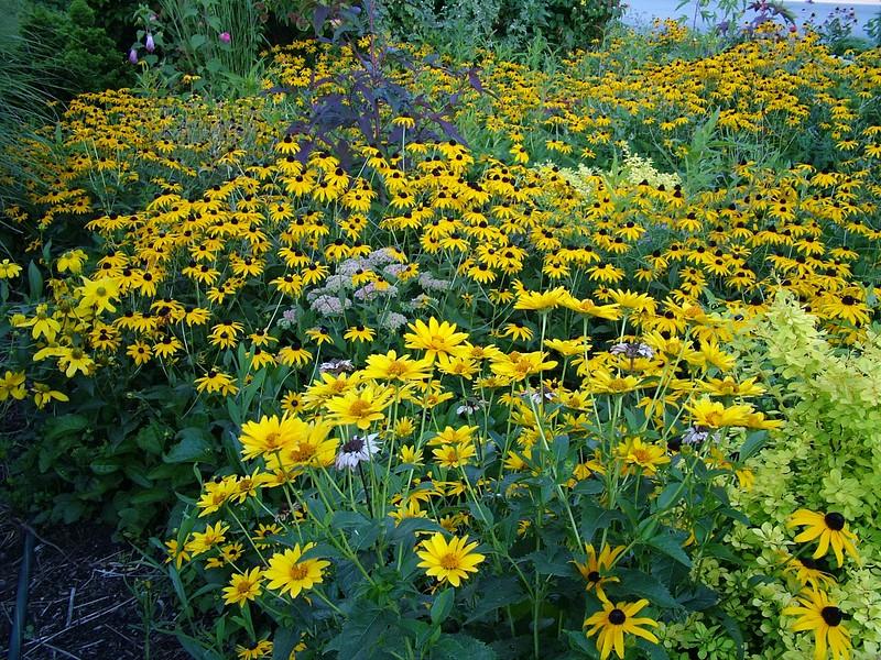 Flowers 082.jpg