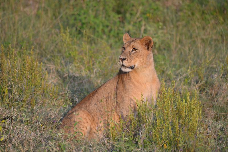 East Africa Safari 131.jpg