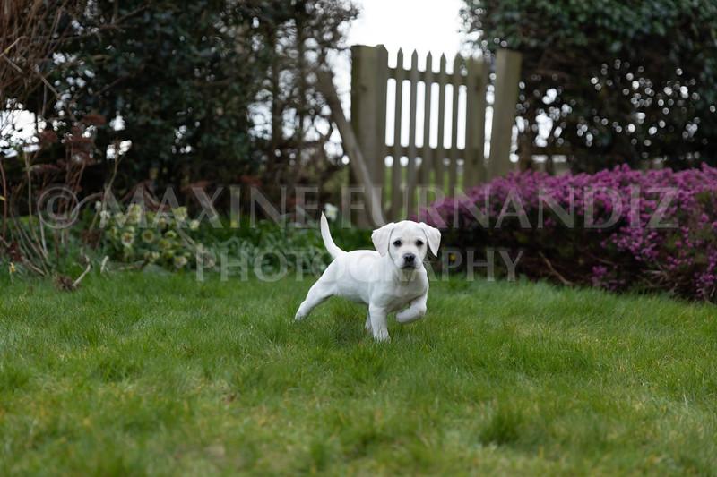 Weika Puppies 24 March 2019-8693.jpg