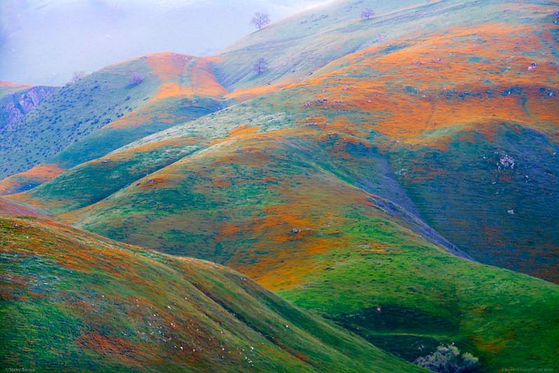 Wildflower_Green_Hills_Southern_California_DSC5815 b.jpg