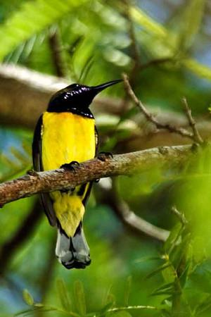 Philippine Birds