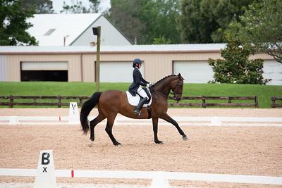 Horse 402
