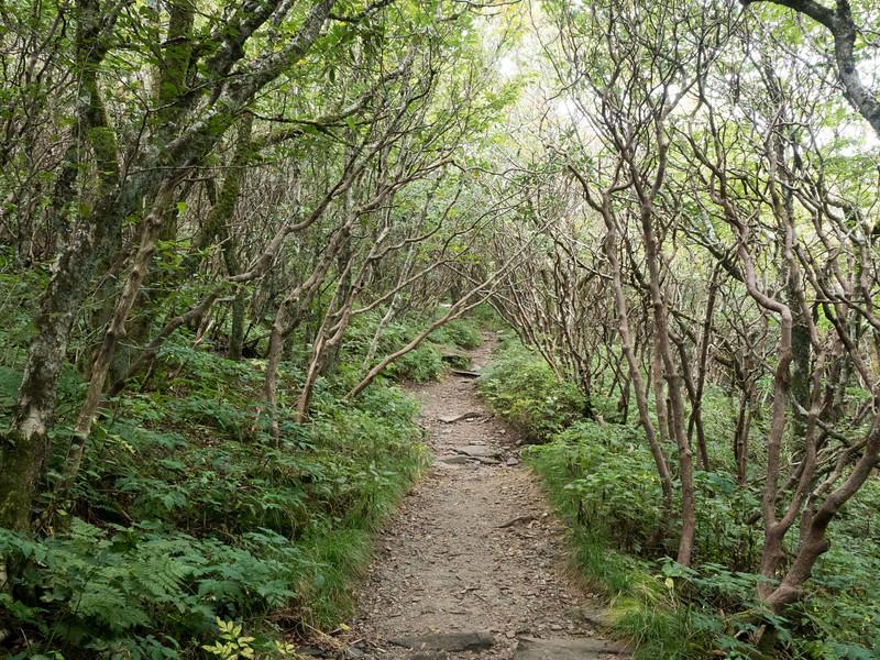 Blue Ridge Mountains hiking
