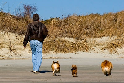 Dogs at the beach: 2006