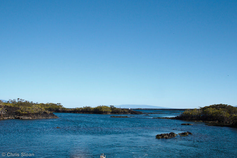 Punta Moreno, Galapagos, Ecuador (11-23-2011) - 674.jpg