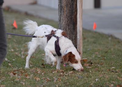 My Dogs - Nosework Photos