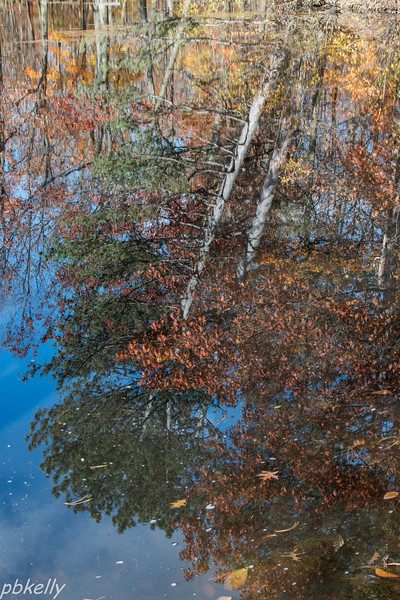 Reflections 110313-4.jpg