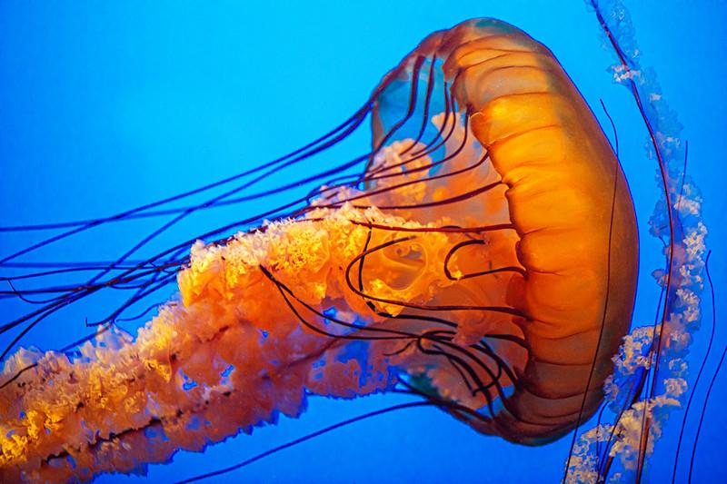Monterey Aquarium034 copy.jpg