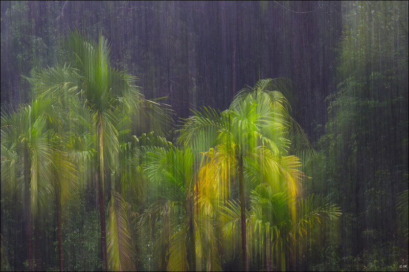 Monsoon Magic......