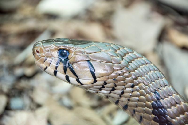 Costa Rica_Reptiles-2.jpg