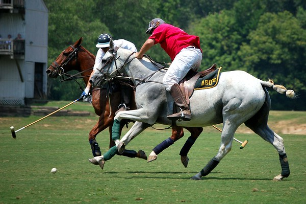 Polo at the Palisades