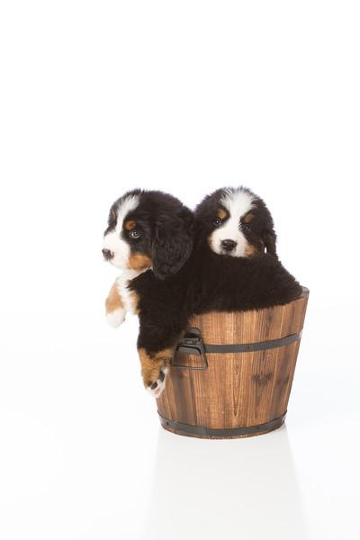 2013-Pearson Pups-Jun02-0466.jpg